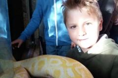 Mini Zoo Ganster 2 Klassen (13)