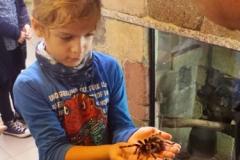 Mini Zoo Ganster 2 Klassen (24)