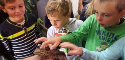 Besuch Mini Zoo Ganster 2. Klassen